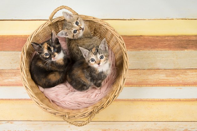 Three cute baby cat kittens in a wicker basket looking up seen from a high angle view on a multi pastel colored wooden background