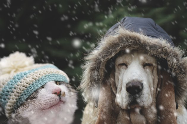 Cat and dog in winter cap