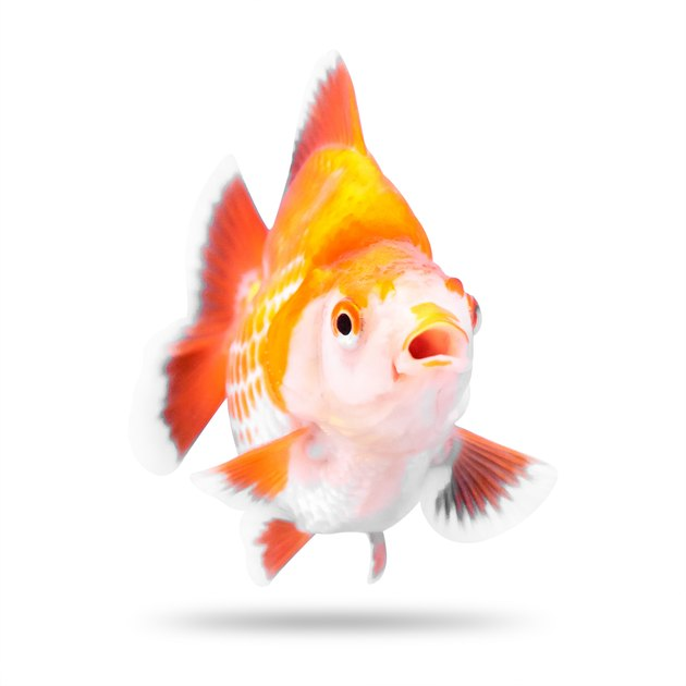 Choosing a name that fits your pet fish's personality doesn't have to be hard when you have over 500 ideas to choose from