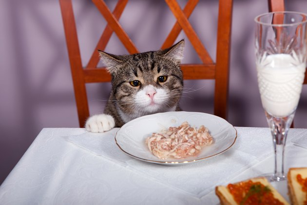 Feast for cat