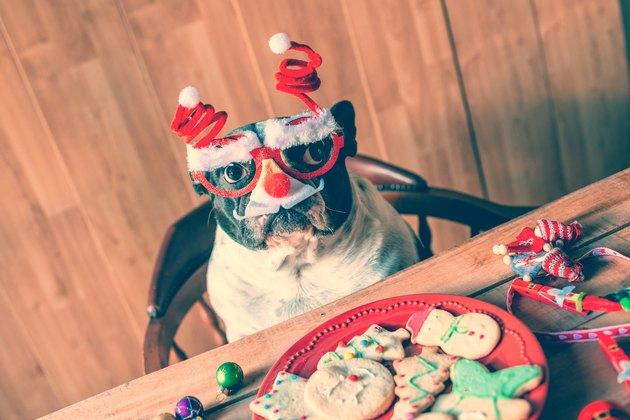 Dog with Christmas glasses