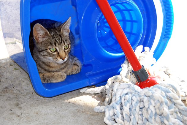 Gray cat resting in blue bucket looking at mop