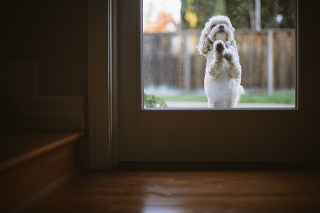 Dog Is Jumping on Door to be let inside