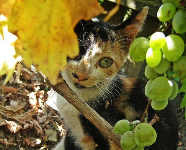 Kitten loves autumn