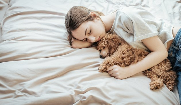 Young woman lying with Poodle in bed