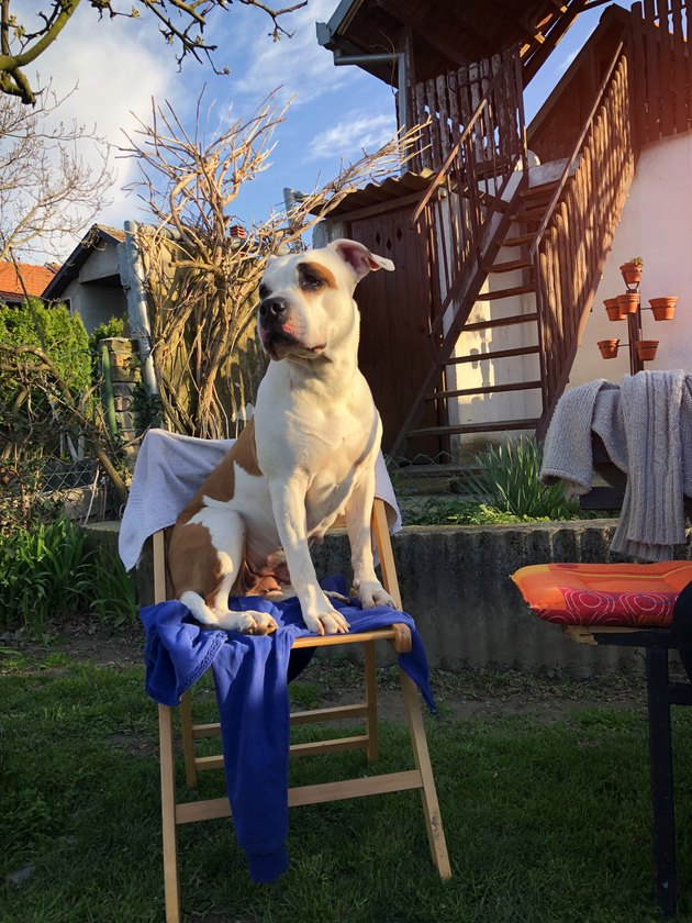 Dog On The Chair Outdoors