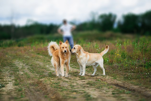 Playful dogs with at walk at field on green meadow