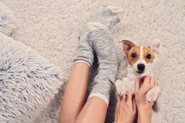women with warm socks and small dog