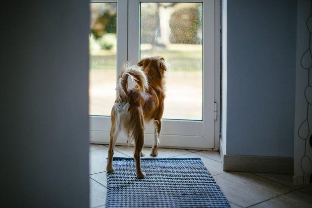 Small dog looking through glass door