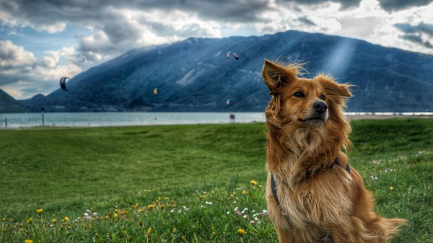 Dog Sitting On Grassy Field By River Against Cloudy Sky