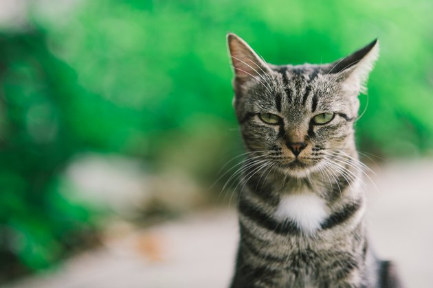 American cats shock Harry .