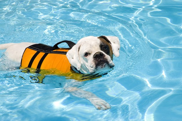 14 Water Safety Tips To Protect Your Dog This Summer