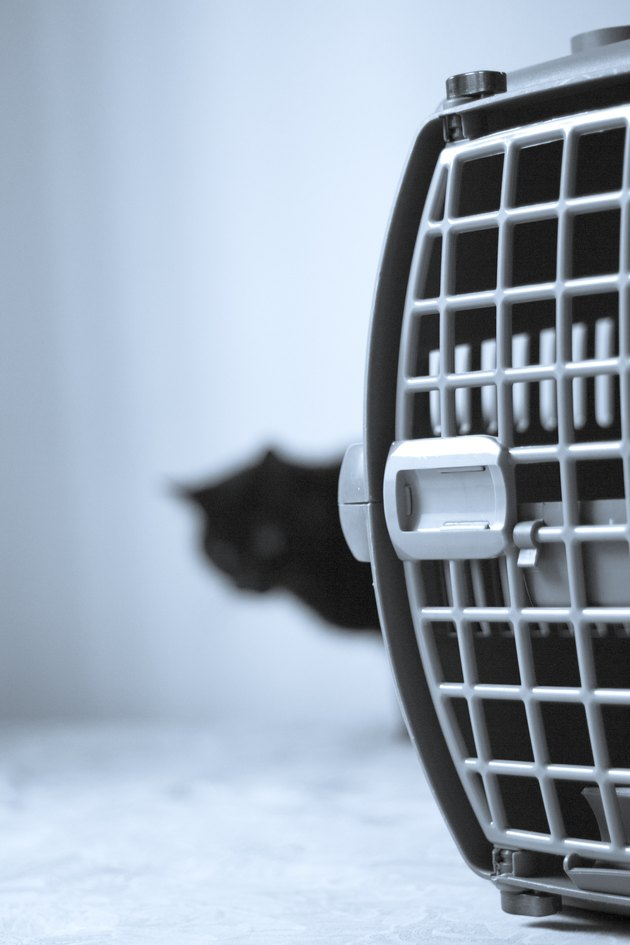 Large pet carrier with black defocused cat