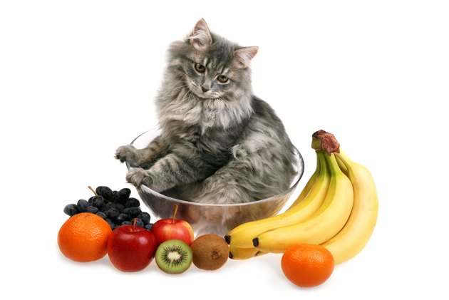 What Can I Feed My Cat or Kitten?