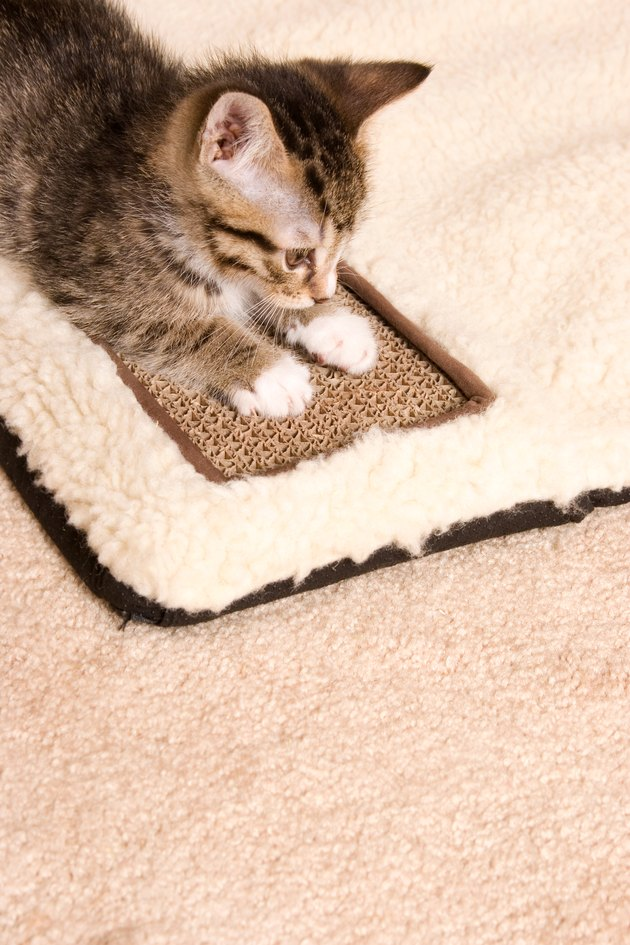 Kitten using scratching board