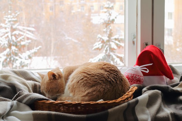 Red cat sleeping in a wicker basket.