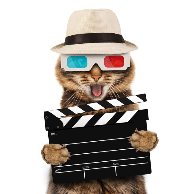 movie director cat with a clapperboard