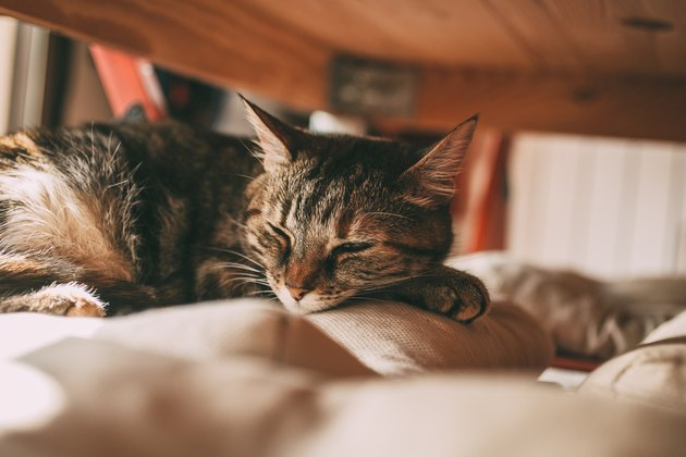 Beautiful tabby cat sleeping under a table. Lovely cat portrait. Domestic animals and pets concept.