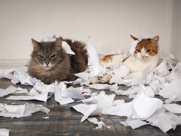 Cat and kitten played. Animals tore up important papers and made a mess on the floor