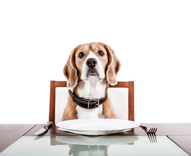 Dog waiting patiently for his supper