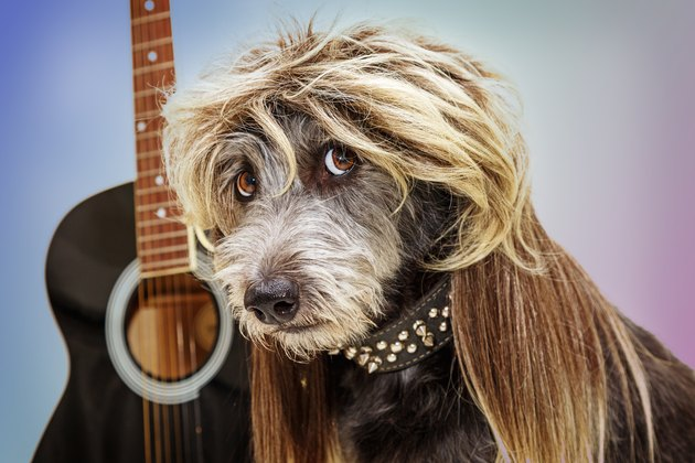 Funny Punk Rock Star Dog