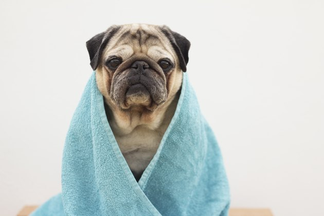 Dog with a bath towel