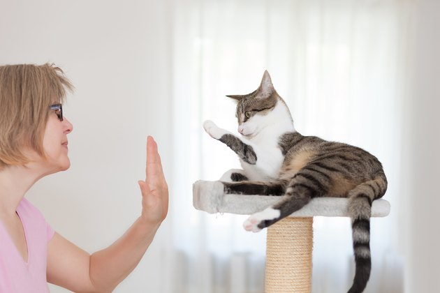 blonde woman and cat gives  high five