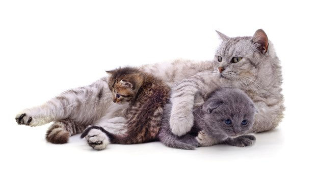 Mom cat with kittens.