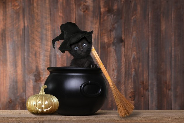 Adorable Kitten Dressed as a Halloween Witch With Hat and Broom in Cauldron