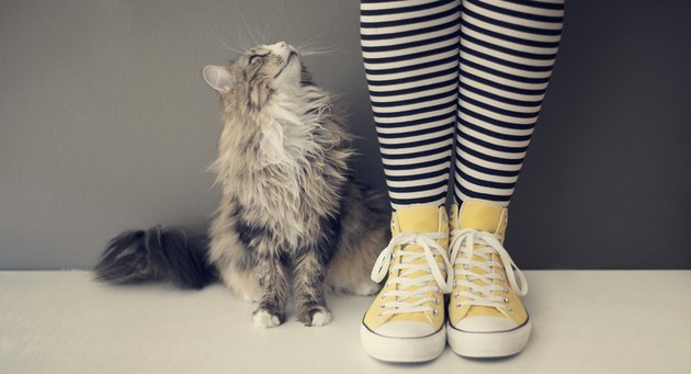 Cat next to human legs with yellow shoes
