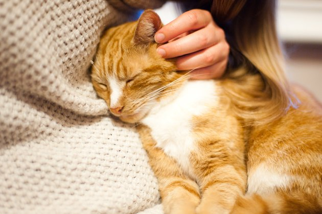 Ginger cat being stroked by his owner