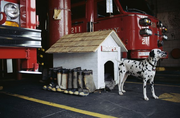 Dalmatian at Fire Station Doghouse