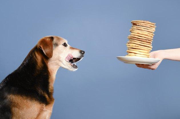 Dog celebrates with pancakes