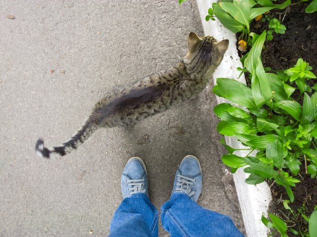 cat and human feet on pavement