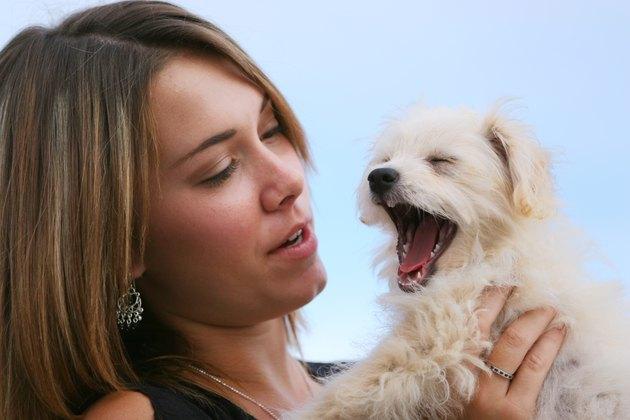 yawning puppy