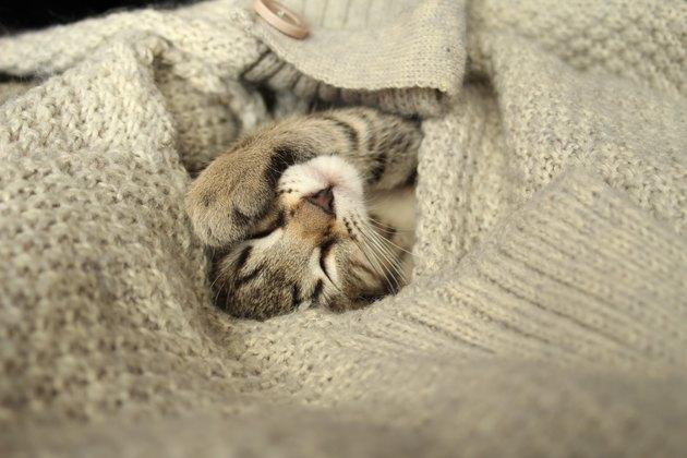 Wrapped kitten in a woolen sweater