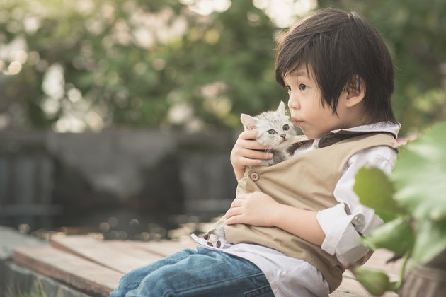 Asian boy  holding american short hair  kitten