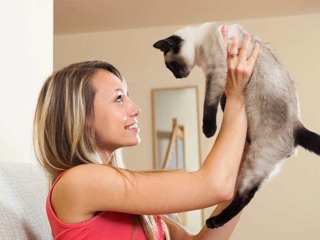 Girl playing with Siamese kitten