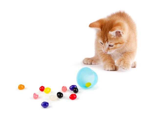Cute Orange Kitten spilling jelly beans on White