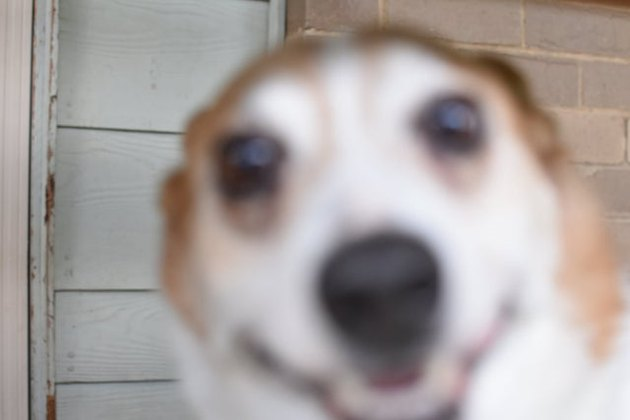 Happy, blurry dog