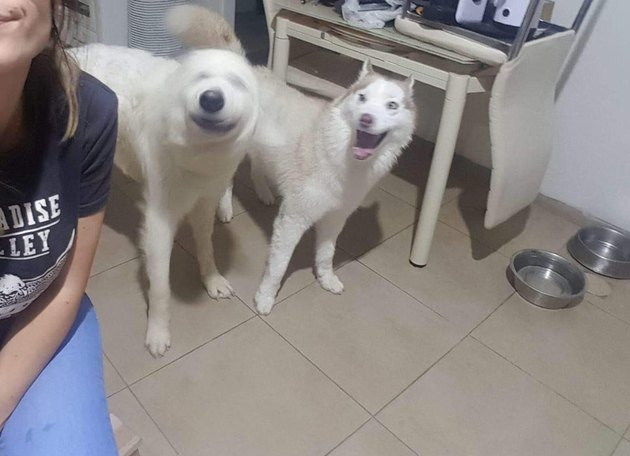 One dog smiling at another dog with a blurry head