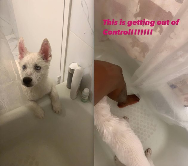 dog follows woman into shower