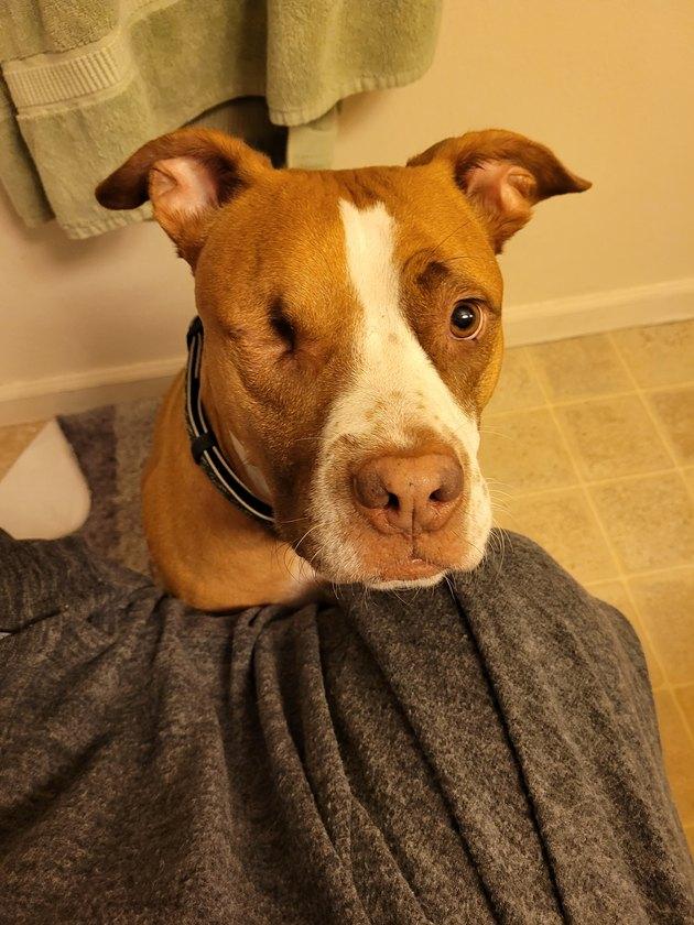 dog follows woman to bathroom