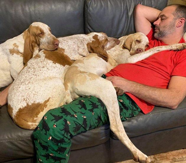 dogs sleep on man's chest