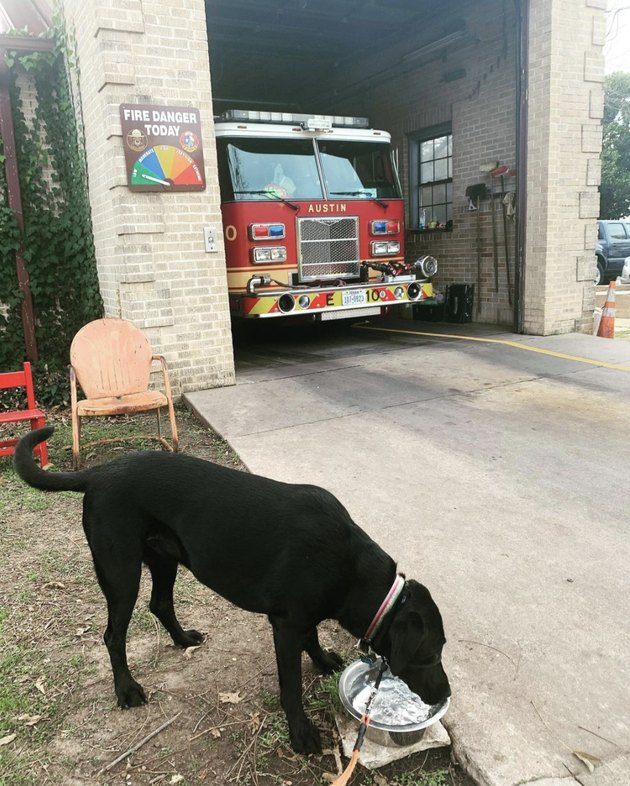 dog drinking water at fire station