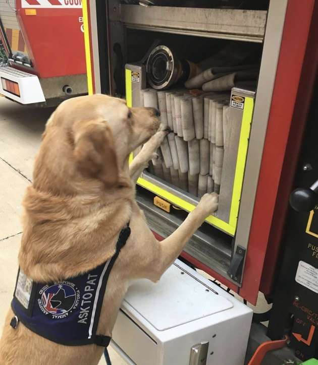 dog looking at fire hose