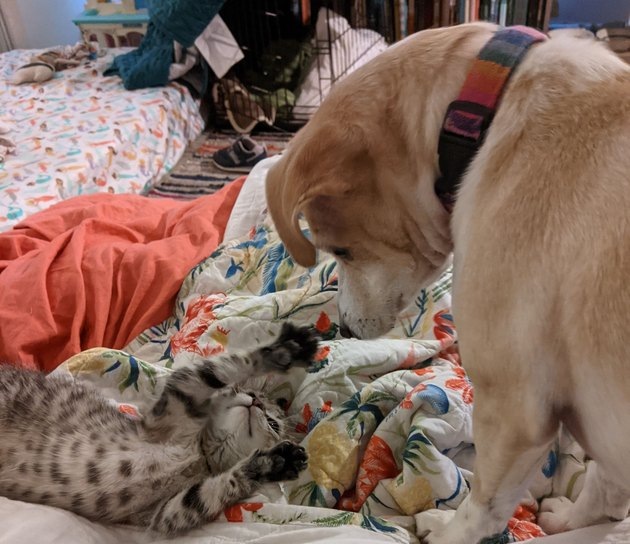 a dog and a cat on a bed