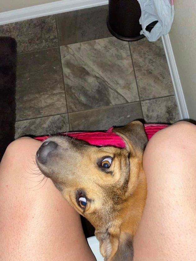 dog sits in woman's underwear