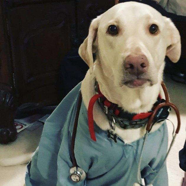 dog with stethoscope