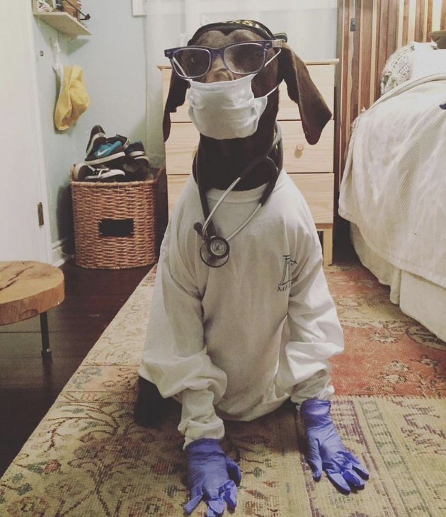 dog with stethoscope and face mask